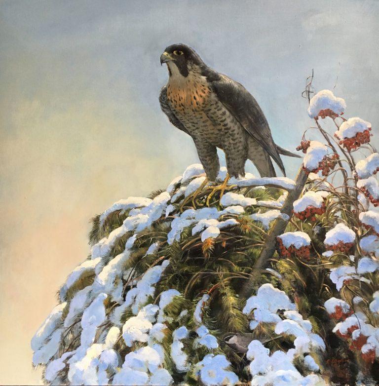 Winter Peregrine by Nicholas Oberling