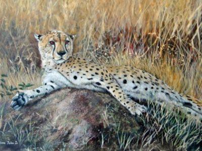 William John Jr Reclining Cheetah Painting