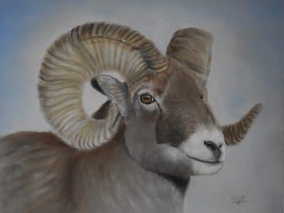 suzy combs big horn sheep ram acrylic painting