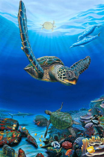 hilton alves honu star hawaii sea turtle print
