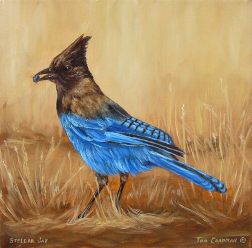 tom chapman stellar jay bird painting